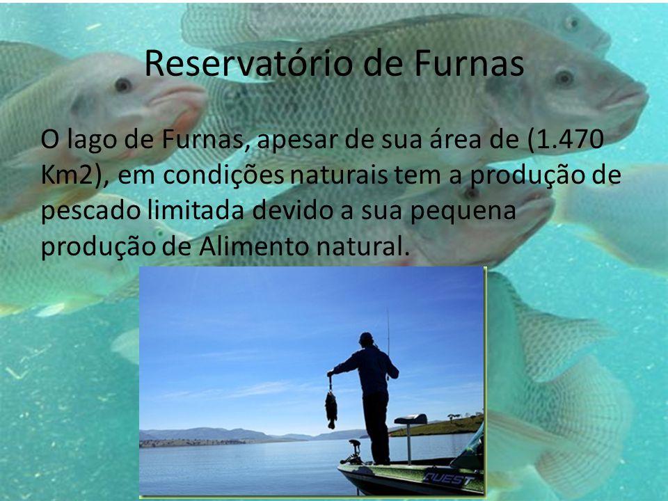 Reservatório de Furnas O lago de Furnas, apesar de sua área de (1.470 Km2), em condições naturais tem a produção de pescado limitada devido a sua pequena produção de Alimento natural.