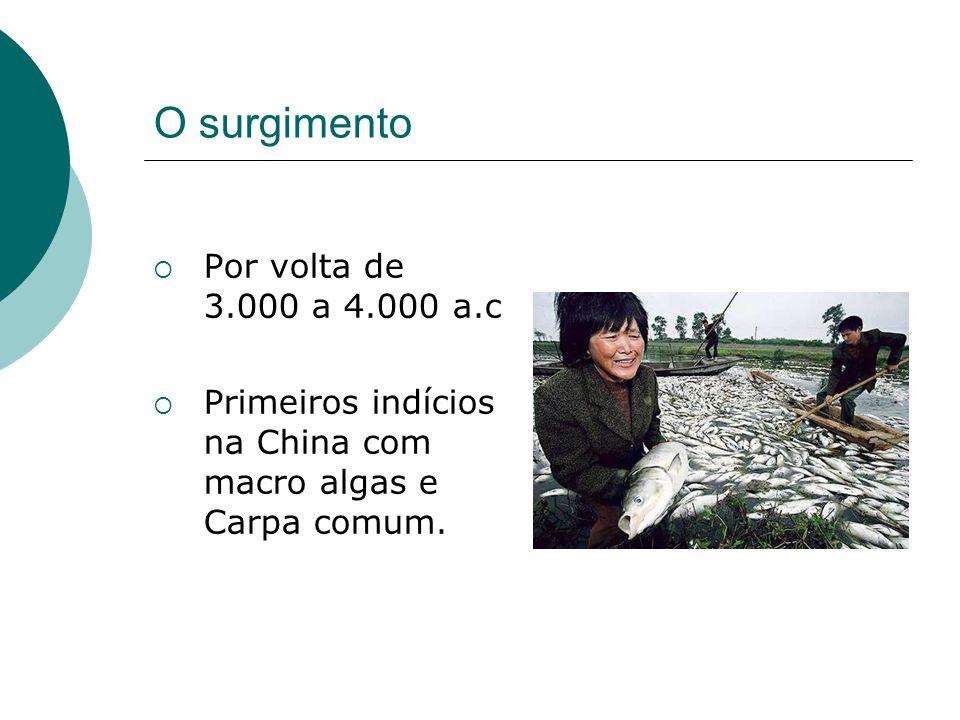 O surgimento Por volta de 3.000 a 4.000 a.c Primeiros indícios na China com macro algas e Carpa comum.