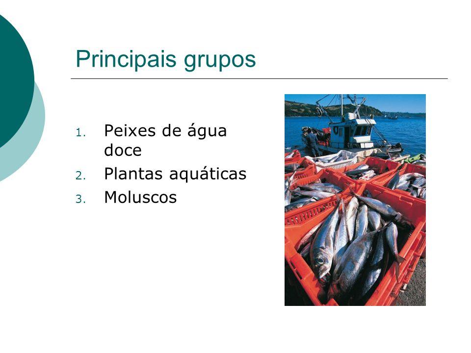 Principais grupos 1. Peixes de água doce 2. Plantas aquáticas 3. Moluscos
