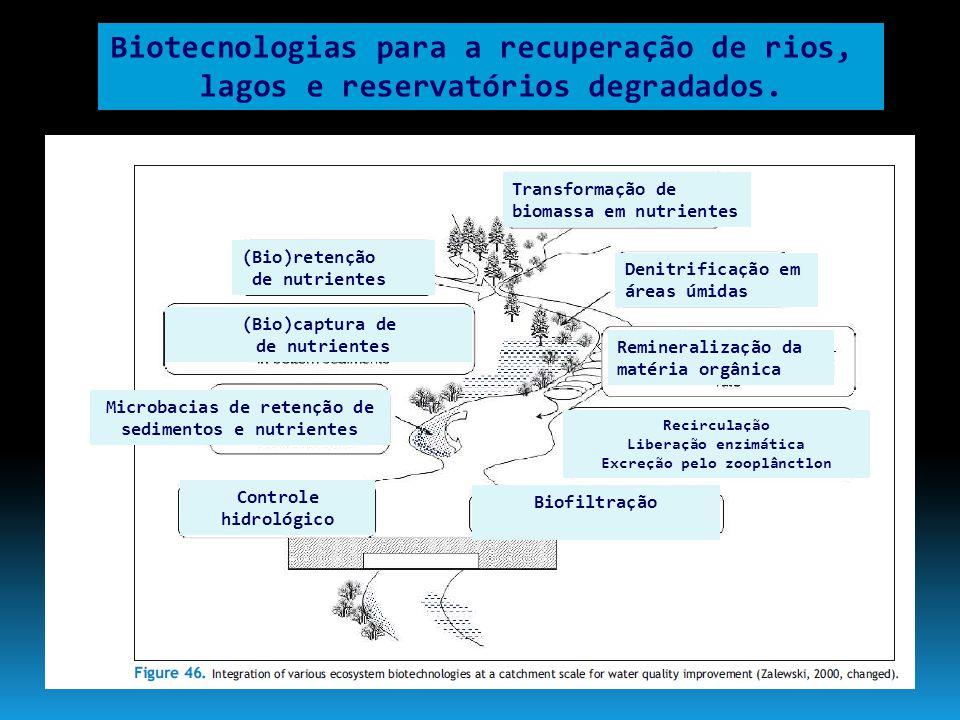 Biotecnologias para a recuperação de rios, lagos e reservatórios degradados. Transformação de biomassa em nutrientes (Bio)retenção de nutrientes (Bio)