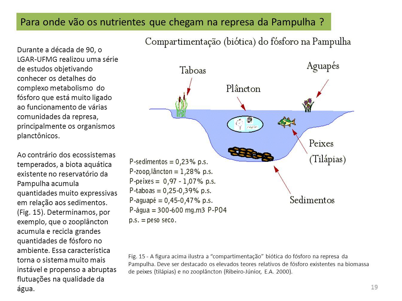 Fig. 15 - A figura acima ilustra a compartimentação biótica do fósforo na represa da Pampulha. Deve ser destacado os elevados teores relativos de fósf