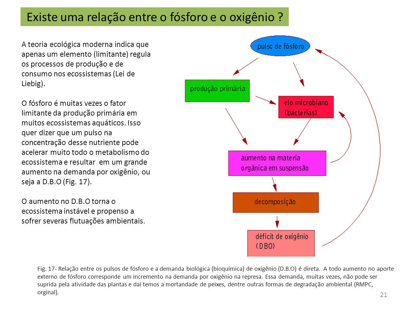 Fig. 17- Relação entre os pulsos de fósforo e a demanda biológica (bioquímica) de oxigênio (D.B.O) é direta. A todo aumento no aporte externo de fósfo