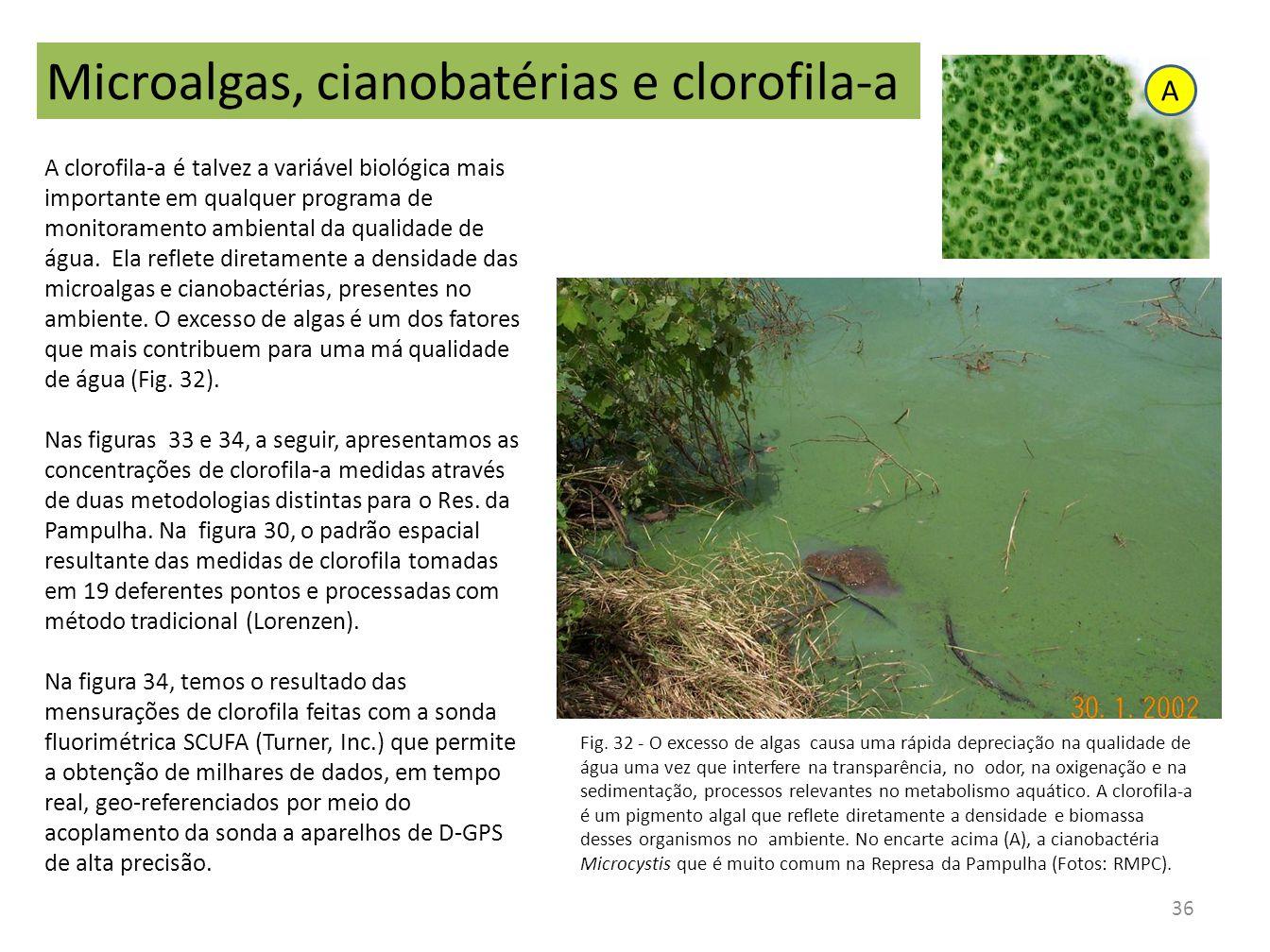 Microalgas, cianobatérias e clorofila-a A clorofila-a é talvez a variável biológica mais importante em qualquer programa de monitoramento ambiental da