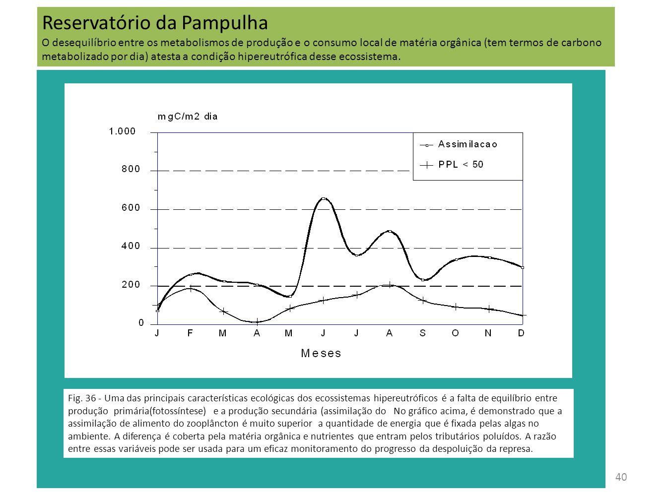 40 Fig. 36 - Uma das principais características ecológicas dos ecossistemas hipereutróficos é a falta de equilíbrio entre produção primária(fotossínte