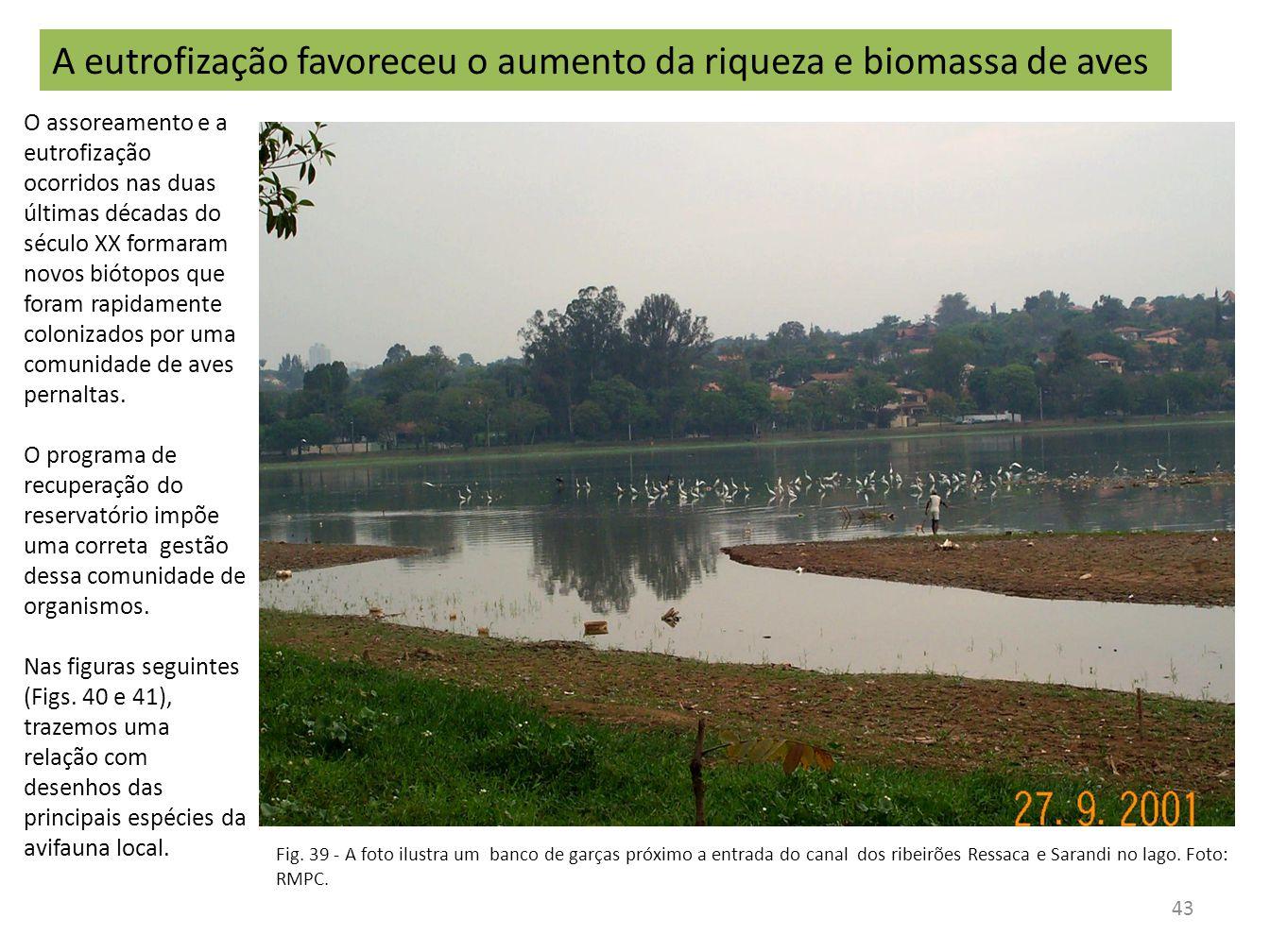1 - Gallinula chloropus (Frango-d água-comum) 2 - Podilymbus podiceps (Mergulhão) - Plumagem reprodutiva 2a - Plumagem de descanso 3 - Tringa solitaria (Maçarico-solitário) 4 - Vanellus chilensis (Quero-quero) 5 - Jacana jacana (Jaçanã) - Adulto 5a - Jovem 6 - Phalacrocorax brasilianus (Biguá) 7 - Aramus guarauna (Carão) 8 - Dendrocygna bicolor (Marreca-caneleira) 9 - Dendrocygna viduata (Irerê) 10 - Dendrocygna autumnalis (Asa-branca) 11 - Netta erythrophthalma (Paturi-preta) 12 - Amazonetta brasiliensis (Ananaí) 13 - Casmerodius albus (Garça-branca-grande) 14 - Egretta thula (Garça-branca-pequena) 15 - Nycticorax nycticorax (Savacu) 16 - Butorides striatus (Socozinho) 17 - Tringa flavipes (Maçarico-de-perna-amarela) 44 Aves pernaltas encontradas na represa da Pampulha (2001).