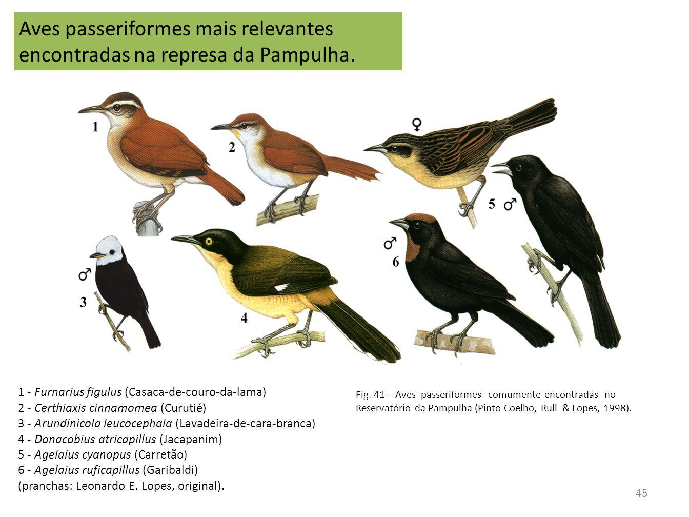 1 - Furnarius figulus (Casaca-de-couro-da-lama) 2 - Certhiaxis cinnamomea (Curutié) 3 - Arundinicola leucocephala (Lavadeira-de-cara-branca) 4 - Donac