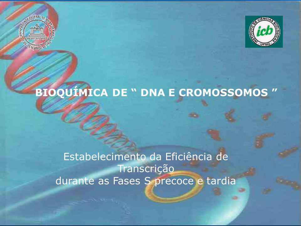 BIOQUÍMICA DE DNA E CROMOSSOMOS Estabelecimento da Eficiência de Transcrição durante as Fases S precoce e tardia