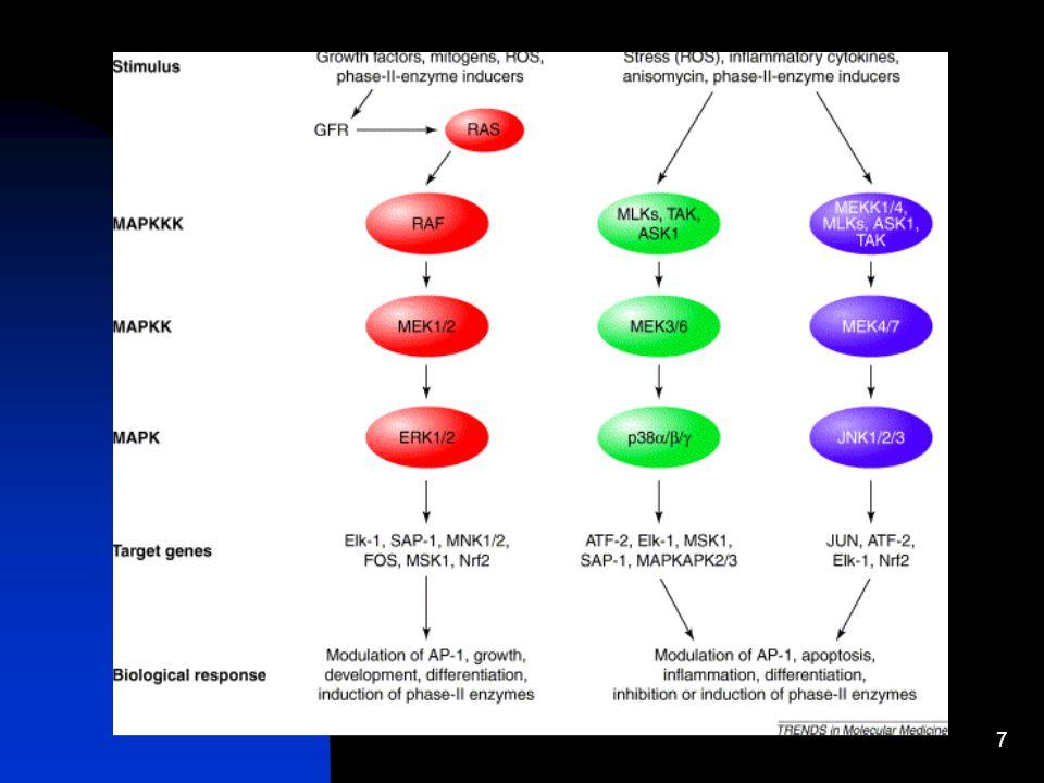 6 Mecanismo pelos quais os agentes específicos da dieta podem medir efeitos cancerígenos Sinalização alterada através de proteínas acionadoras de mito