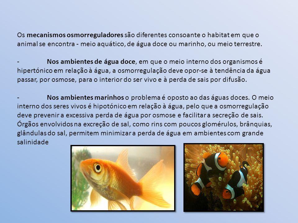 Os mecanismos osmorreguladores são diferentes consoante o habitat em que o animal se encontra - meio aquático, de água doce ou marinho, ou meio terrestre.