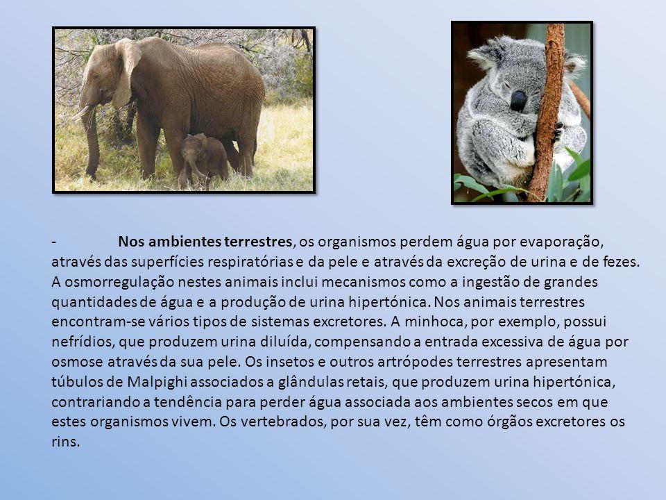 -Nos ambientes terrestres, os organismos perdem água por evaporação, através das superfícies respiratórias e da pele e através da excreção de urina e de fezes.