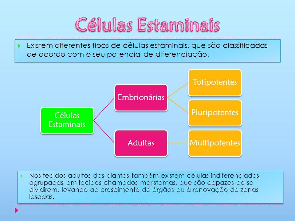Existem diferentes tipos de células estaminais, que são classificadas de acordo com o seu potencial de diferenciação. Células Estaminais EmbrionáriasT