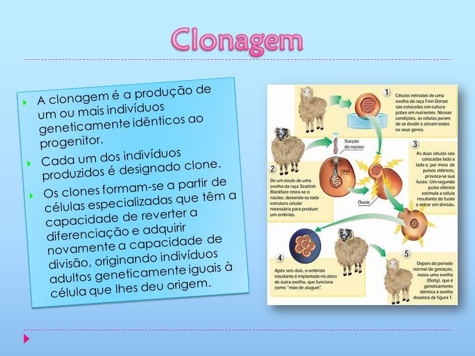 A clonagem é a produção de um ou mais indivíduos geneticamente idênticos ao progenitor. Cada um dos indivíduos produzidos é designado clone. Os clones