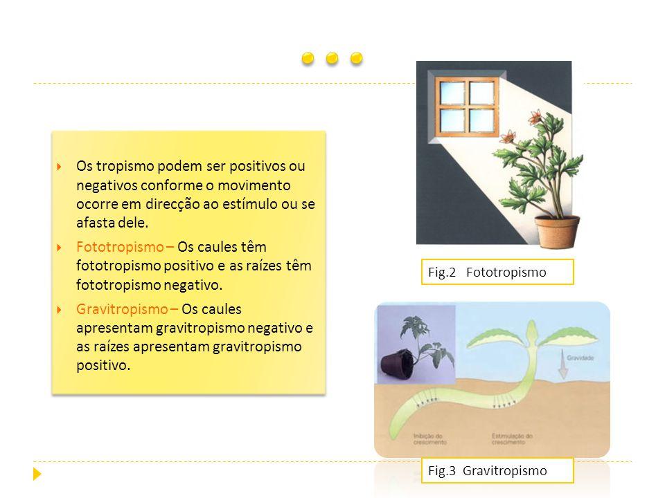 Os tropismo podem ser positivos ou negativos conforme o movimento ocorre em direcção ao estímulo ou se afasta dele. Fototropismo – Os caules têm fotot