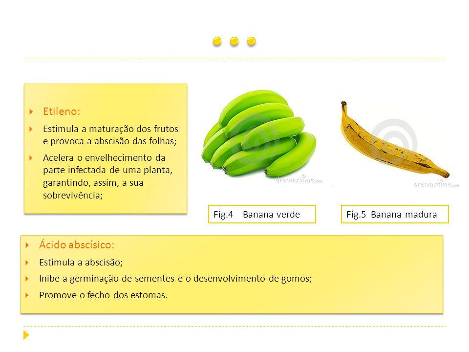 Etileno: Estimula a maturação dos frutos e provoca a abscisão das folhas; Acelera o envelhecimento da parte infectada de uma planta, garantindo, assim