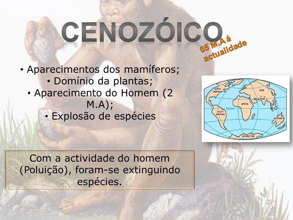 Aparecimentos dos mamíferos; Domínio da plantas; Aparecimento do Homem (2 M.A); Explosão de espécies Com a actividade do homem (Poluição), foram-se ex