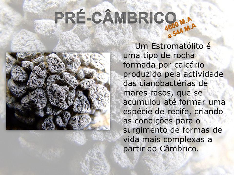 Um Estromatólito é uma tipo de rocha formada por calcário produzido pela actividade das cianobactérias de mares rasos, que se acumulou até formar uma