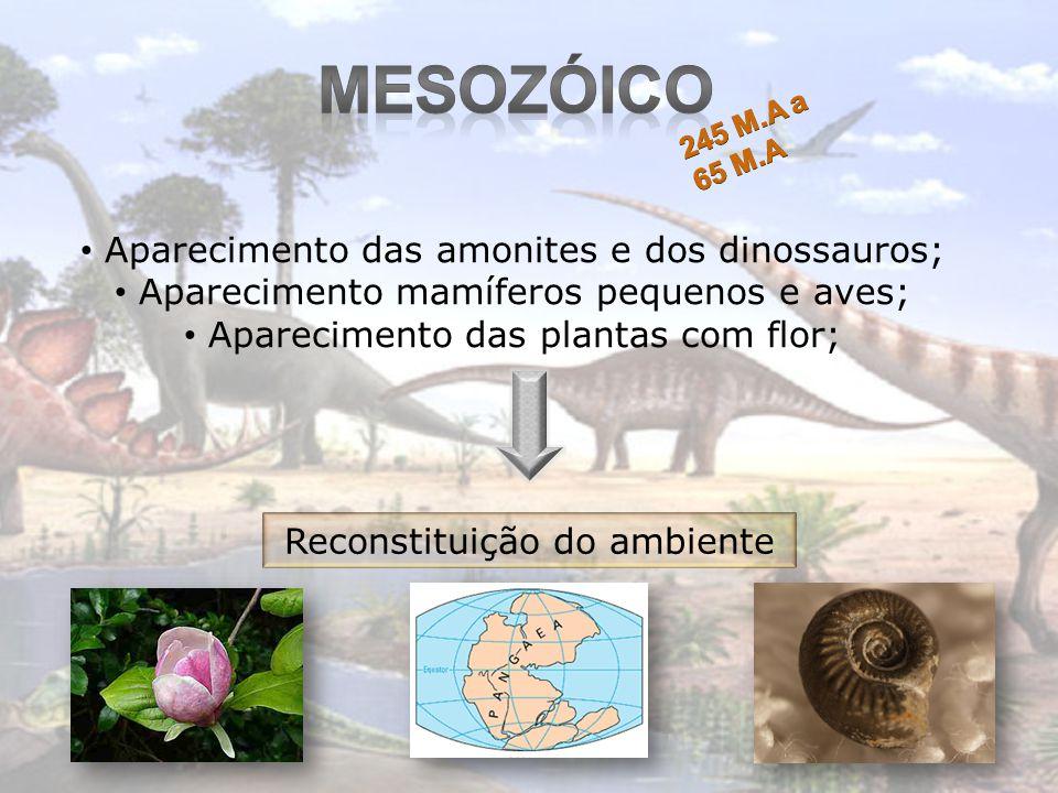 Aparecimento das amonites e dos dinossauros; Aparecimento mamíferos pequenos e aves; Aparecimento das plantas com flor; Reconstituição do ambiente