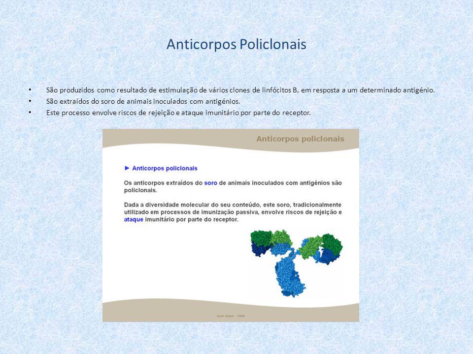 Anticorpos Policlonais São produzidos como resultado de estimulação de vários clones de linfócitos B, em resposta a um determinado antigénio. São extr