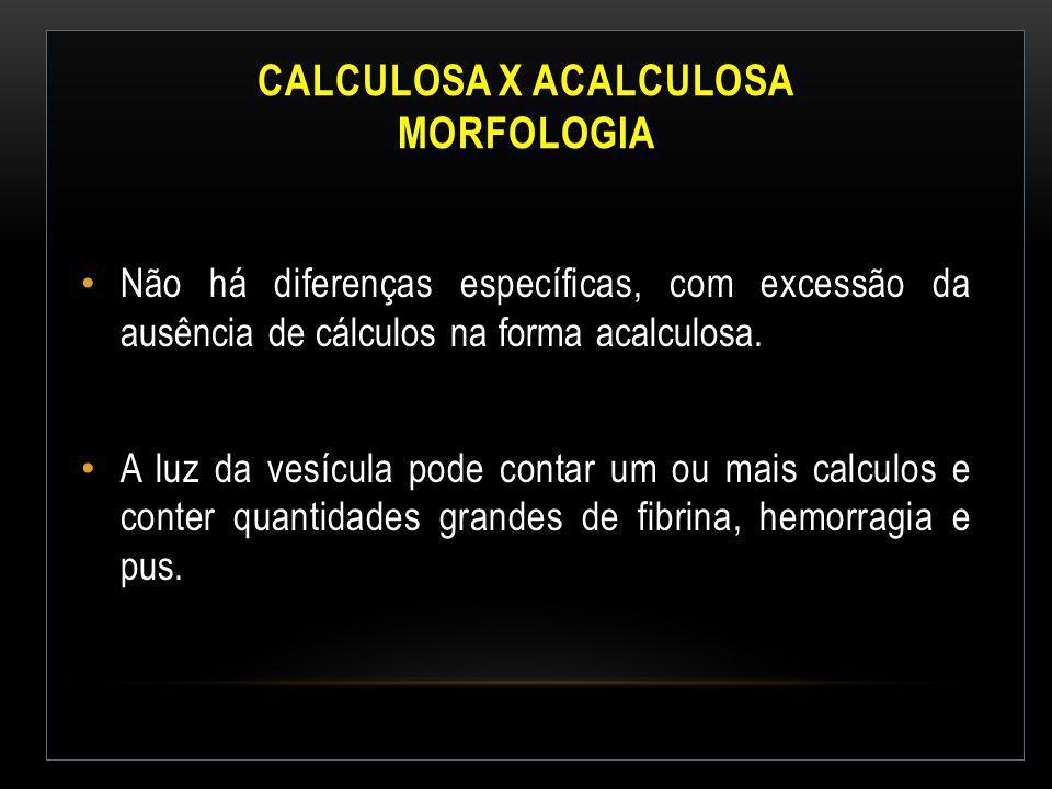 CALCULOSA X ACALCULOSA MORFOLOGIA Não há diferenças específicas, com excessão da ausência de cálculos na forma acalculosa. A luz da vesícula pode cont