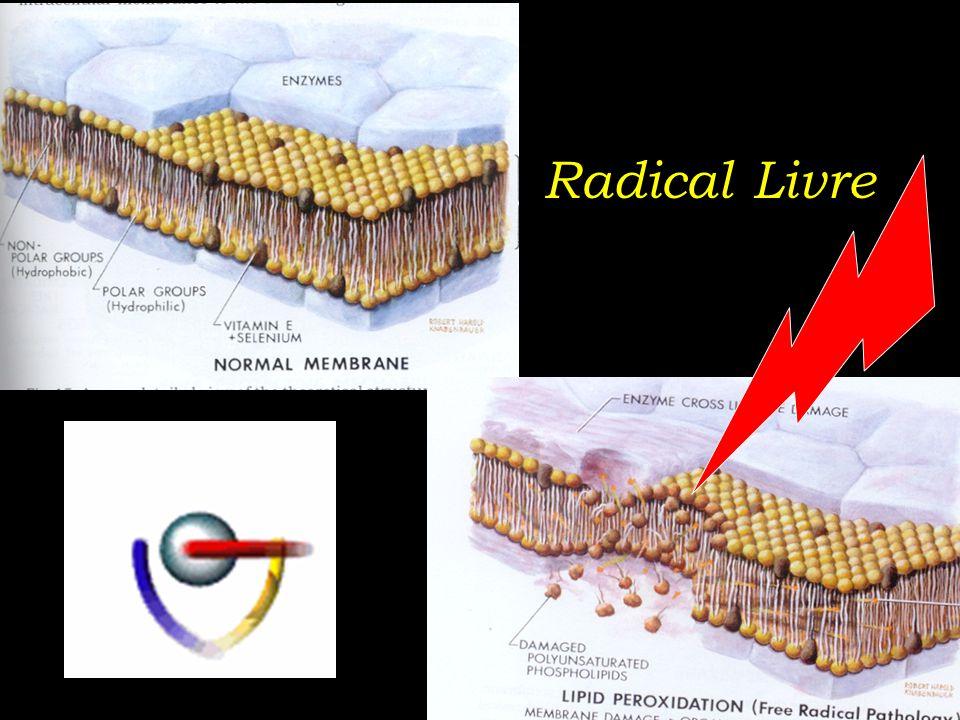 Radical Livre