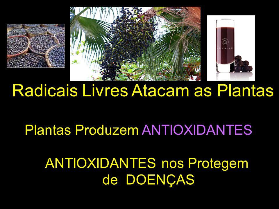 Radicais Livres Atacam as Plantas Plantas Produzem ANTIOXIDANTES ANTIOXIDANTES nos Protegem de DOENÇAS