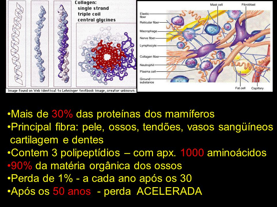 Mais de 30% das proteínas dos mamíferos Principal fibra: pele, ossos, tendões, vasos sangüíneos cartilagem e dentes Contem 3 polipeptídios – com apx.