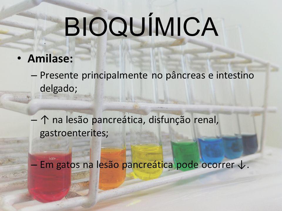 BIOQUÍMICA Amilase: – Presente principalmente no pâncreas e intestino delgado; – na lesão pancreática, disfunção renal, gastroenterites; – Em gatos na