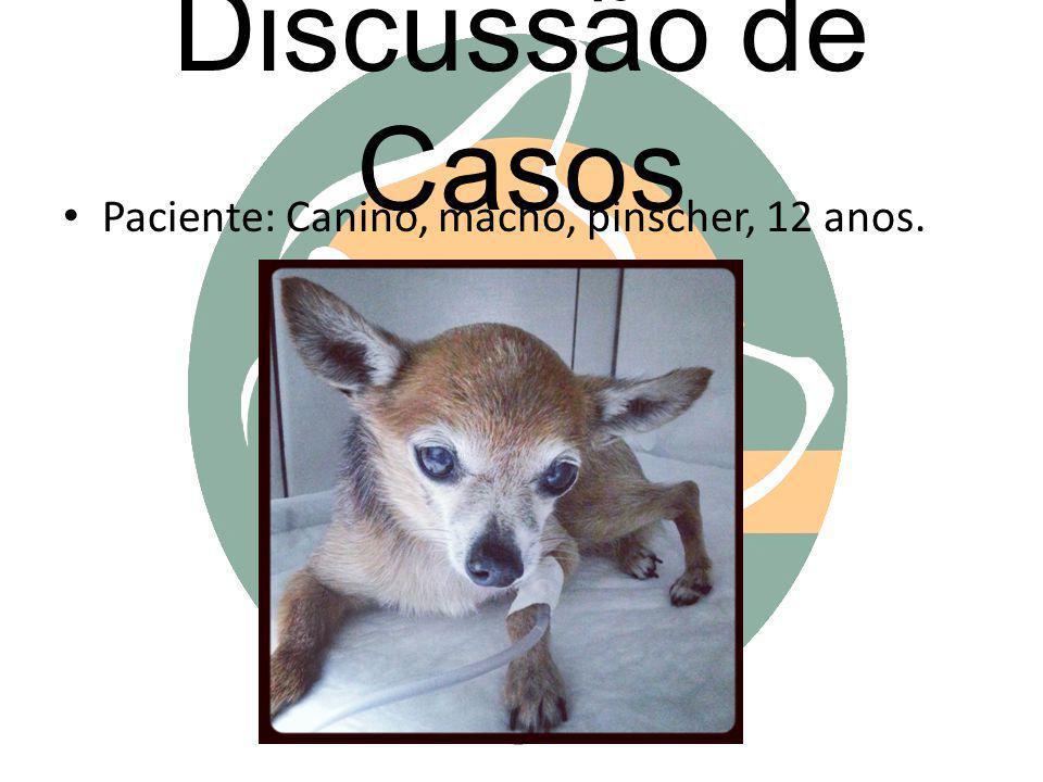 Discussão de Casos Paciente: Canino, macho, pinscher, 12 anos.