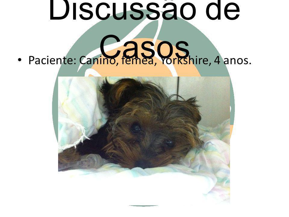 Discussão de Casos Paciente: Canino, fêmea, Yorkshire, 4 anos.