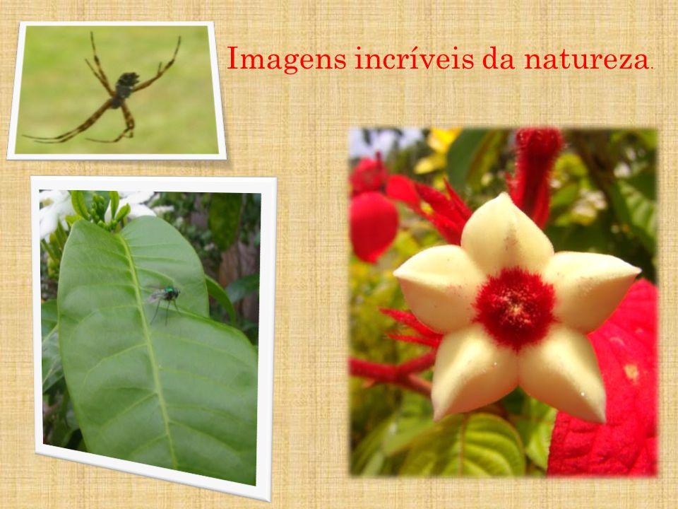 Imagens incríveis da natureza.