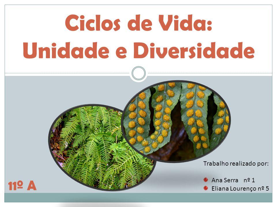 Ciclos de Vida: Unidade e Diversidade Trabalho realizado por: Ana Serra nº 1 Eliana Lourenço nº 5 11º A
