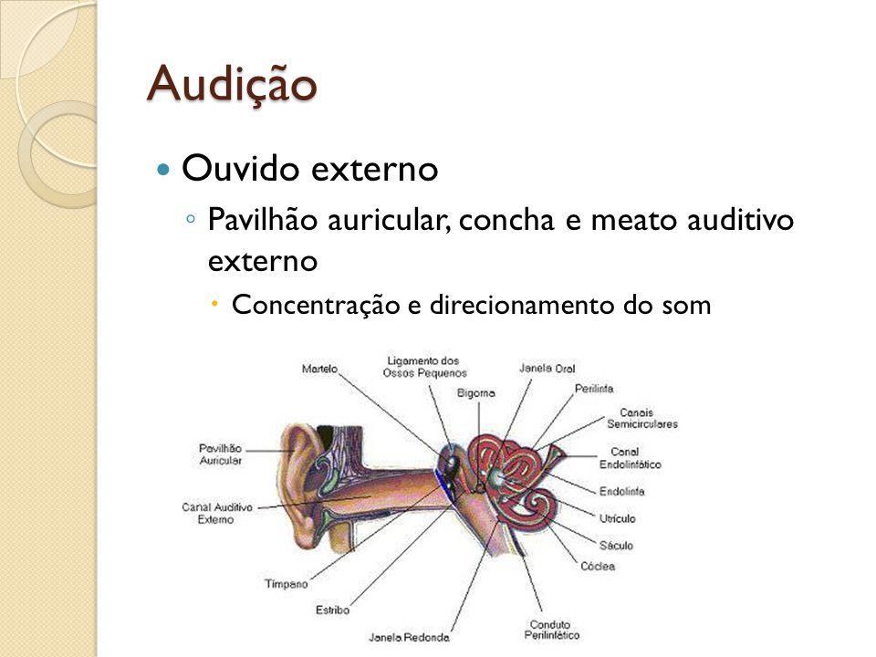 Audição Ouvido externo Pavilhão auricular, concha e meato auditivo externo Concentração e direcionamento do som