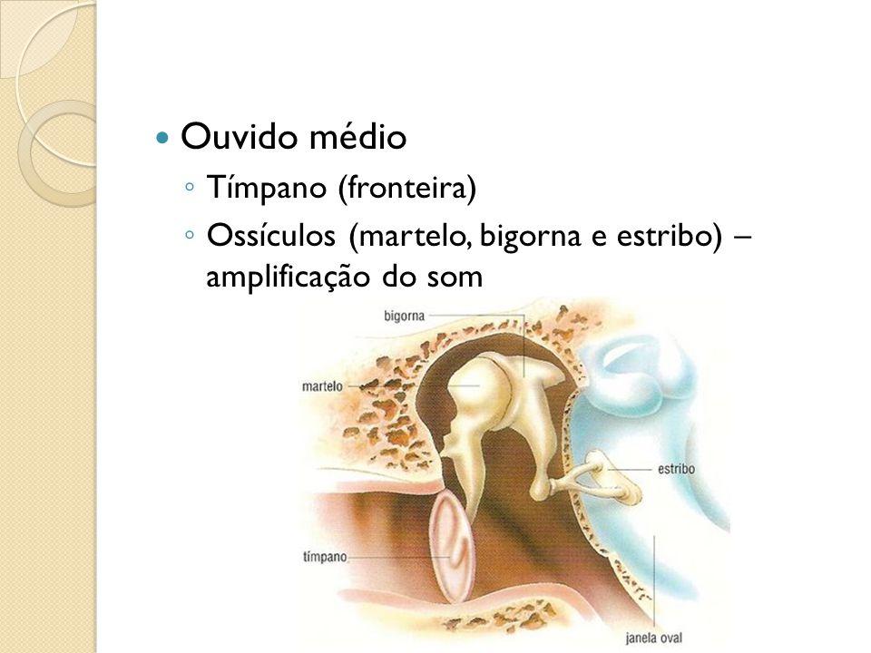 Ouvido médio Tímpano (fronteira) Ossículos (martelo, bigorna e estribo) – amplificação do som