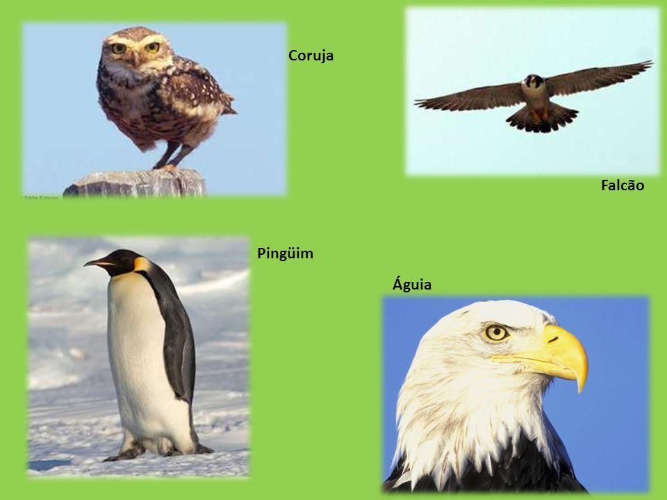 Águia Falcão Coruja Pingüim