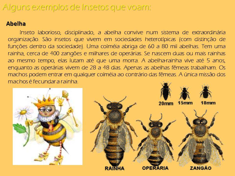 Alguns exemplos de Insetos que voam: Abelha Inseto laborioso, disciplinado, a abelha convive num sistema de extraordinária organização. São insetos qu
