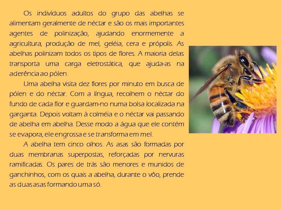 Os indivíduos adultos do grupo das abelhas se alimentam geralmente de néctar e são os mais importantes agentes de polinização, ajudando enormemente a