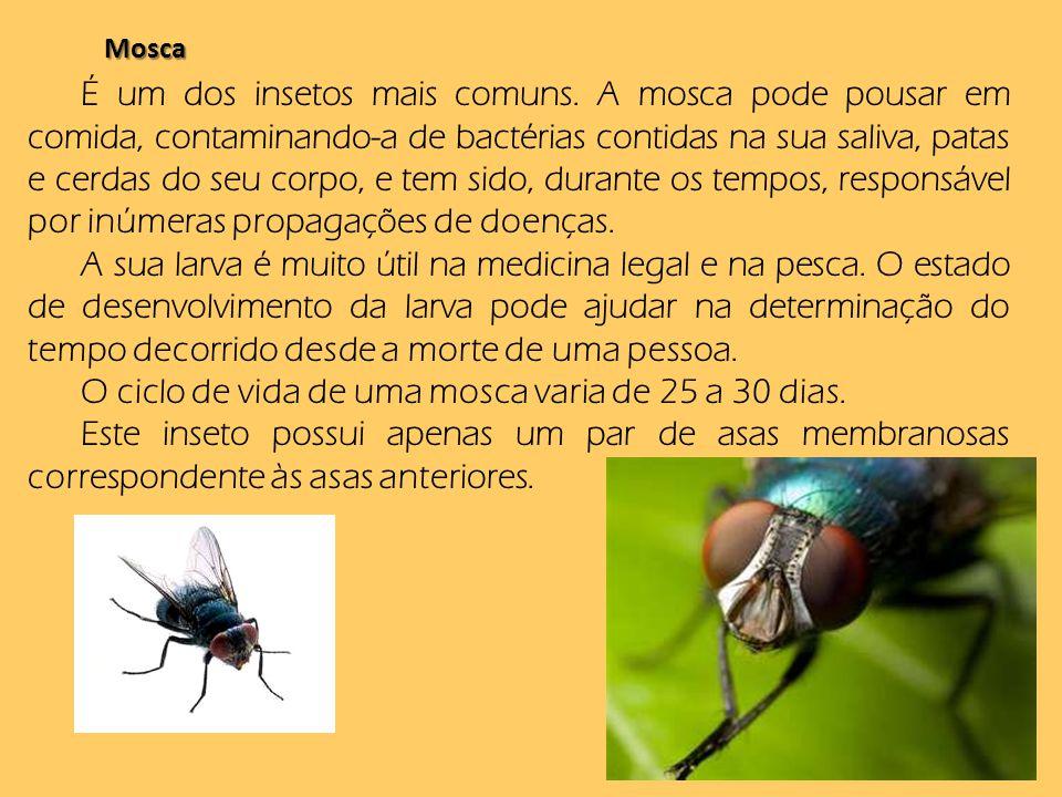 Mosca É um dos insetos mais comuns. A mosca pode pousar em comida, contaminando-a de bactérias contidas na sua saliva, patas e cerdas do seu corpo, e