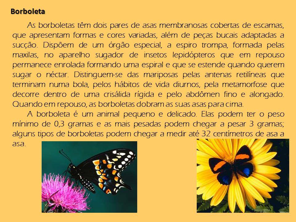 Borboleta As borboletas têm dois pares de asas membranosas cobertas de escamas, que apresentam formas e cores variadas, além de peças bucais adaptadas