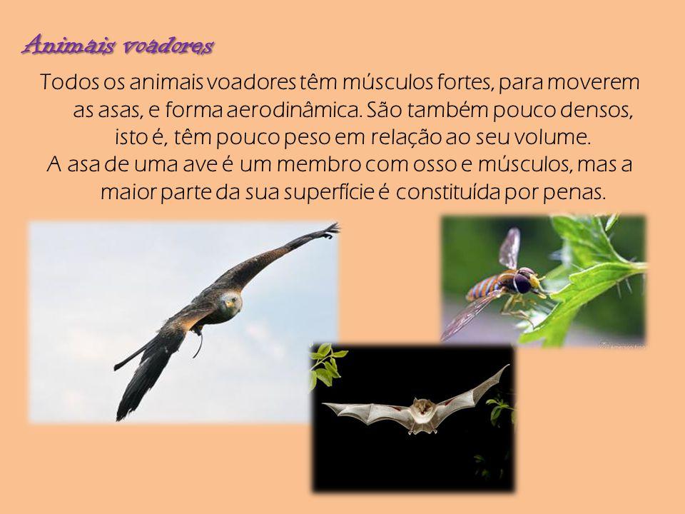 Animais voadores Todos os animais voadores têm músculos fortes, para moverem as asas, e forma aerodinâmica. São também pouco densos, isto é, têm pouco