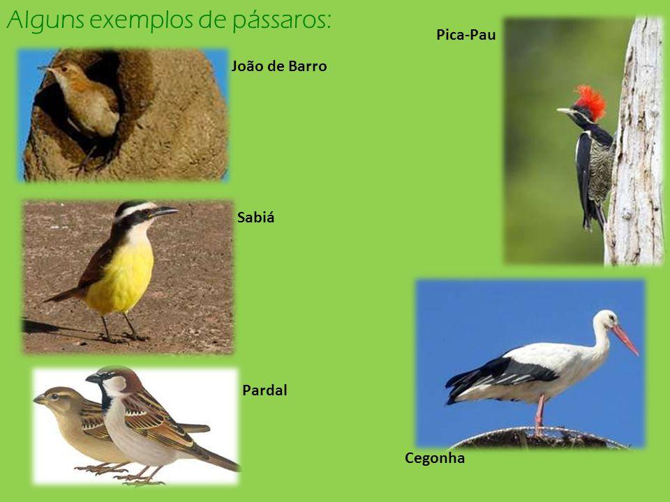 Alguns exemplos de pássaros: Pica-Pau João de Barro Sabiá Pardal Cegonha