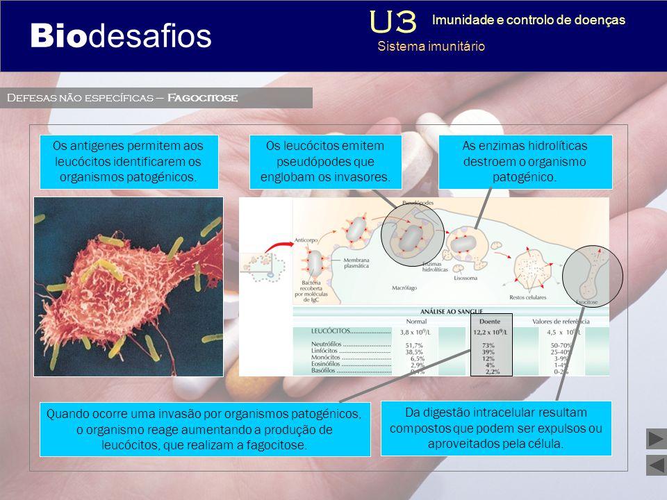 Biodesafios 12 As enzimas hidrolíticas destroem o organismo patogénico. Da digestão intracelular resultam compostos que podem ser expulsos ou aproveit