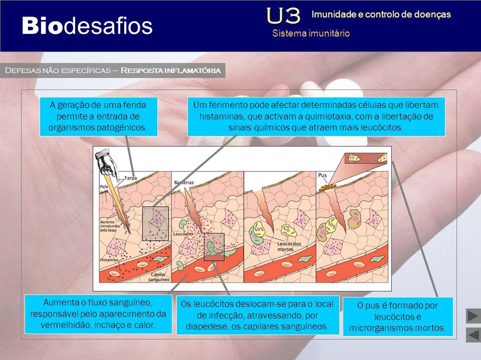 Biodesafios 12 O pus é formado por leucócitos e microrganismos mortos. 3 Imunidade e controlo de doenças Sistema imunitário Aumenta o fluxo sanguíneo,