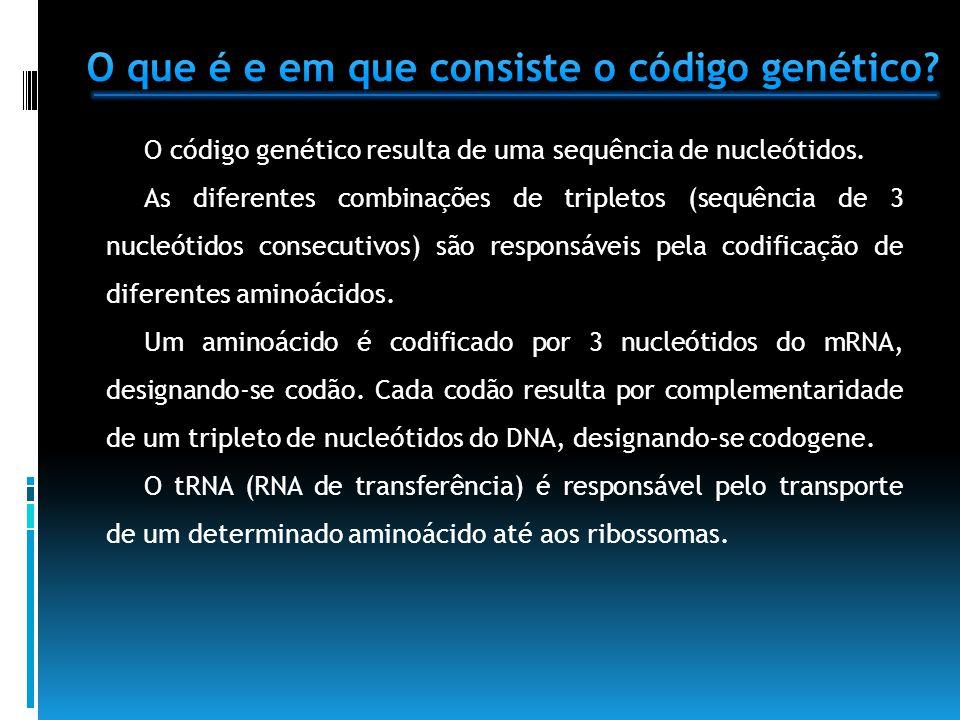 O código genético resulta de uma sequência de nucleótidos. As diferentes combinações de tripletos (sequência de 3 nucleótidos consecutivos) são respon