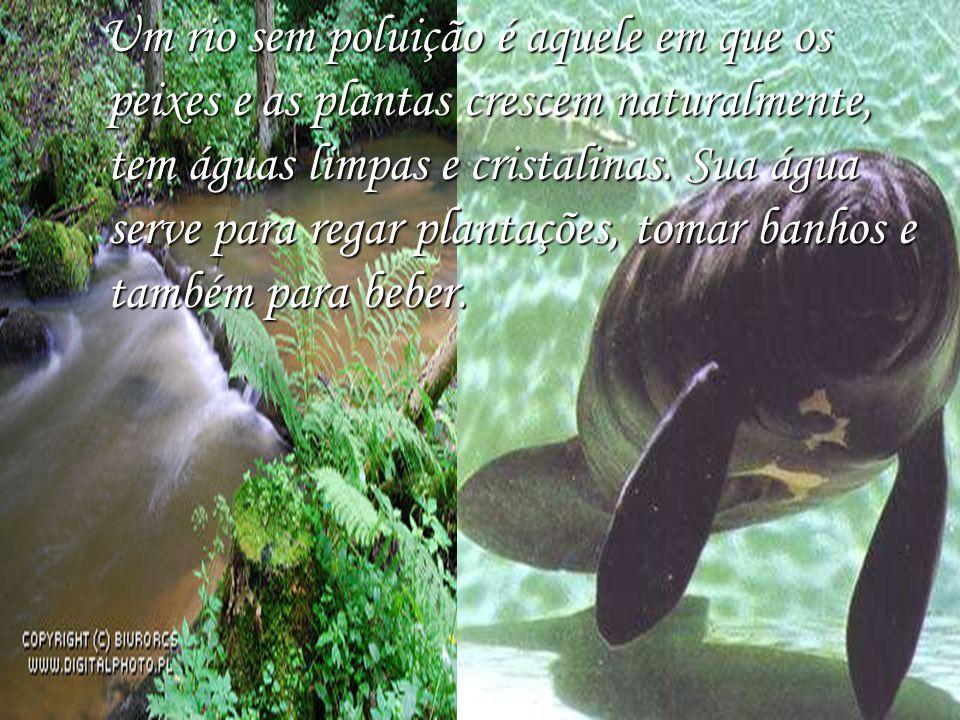 Um rio sem poluição é aquele em que os peixes e as plantas crescem naturalmente, tem águas limpas e cristalinas. Sua água serve para regar plantações,