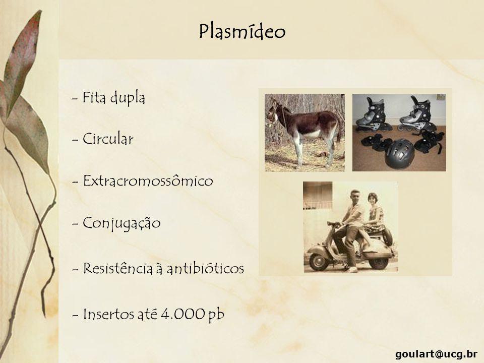 Plasmídeo - Fita dupla - Circular - Extracromossômico - Conjugação - Resistência à antibióticos - Insertos até 4.000 pb
