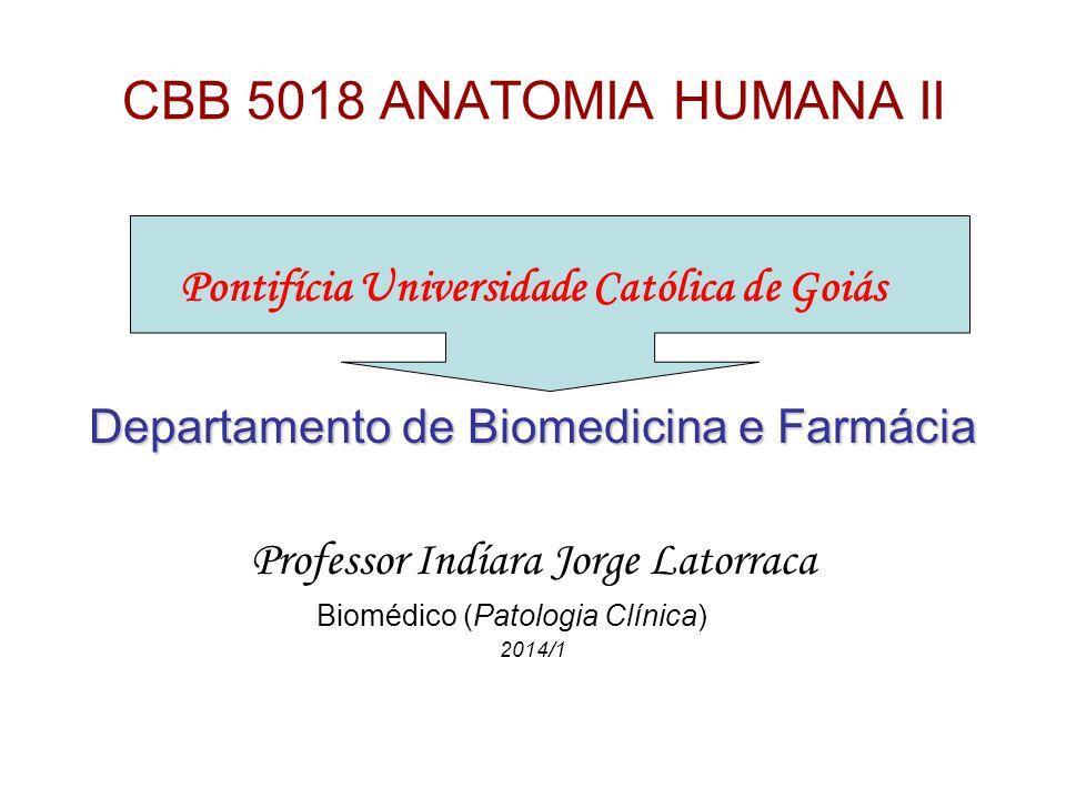 CBB 5018 ANATOMIA HUMANA II Pontifícia Universidade Católica de Goiás Departamento de Biomedicina e Farmácia Professor Indíara Jorge Latorraca Biomédico (Patologia Clínica) 2014/1