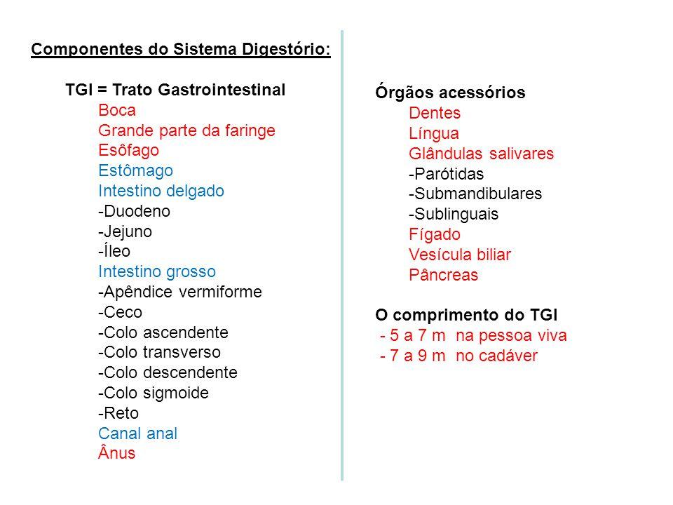 Sistema Digestório 2. VISÃO GERAL DO SD Objetivo: # Identificar os órgãos do sistema digestório e suas funções básicas. a)Dois grupos de órgãos compõe