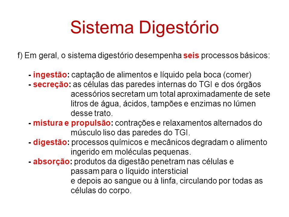 Componentes do Sistema Digestório: TGI = Trato Gastrointestinal Boca Grande parte da faringe Esôfago Estômago Intestino delgado -Duodeno -Jejuno -Íleo