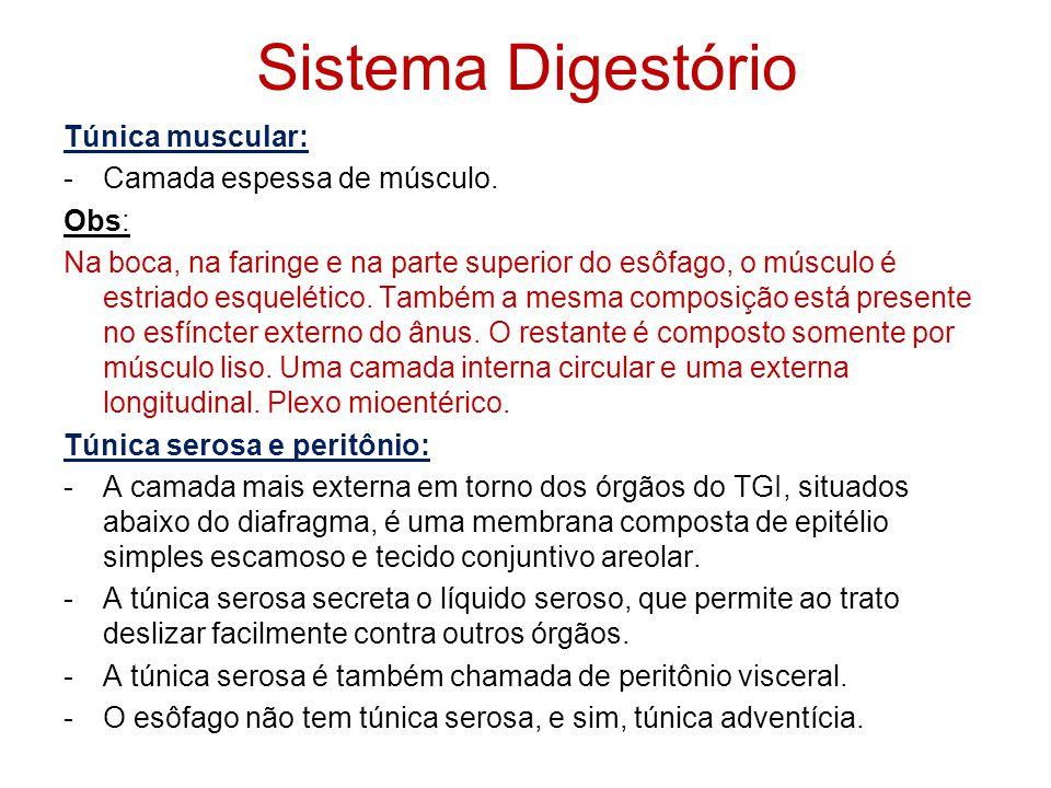 Sistema Digestório Túnica mucosa: -Revestimento interno do trato: -Composta de uma camada de epitélio em contato direto com o conteúdo do TGI, tecido