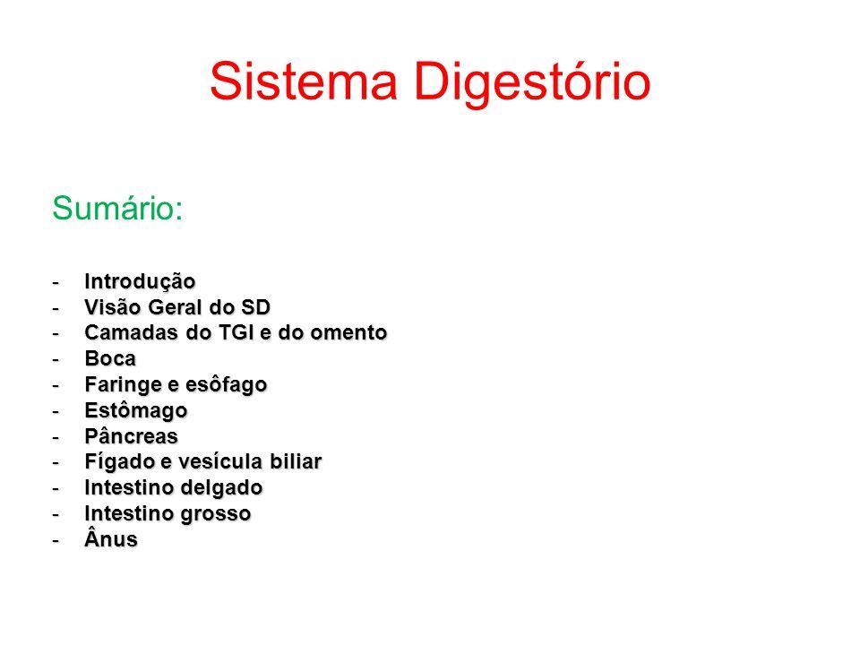 Sistema Digestório Sumário: -Introdução -Visão Geral do SD -Camadas do TGI e do omento -Boca -Faringe e esôfago -Estômago -Pâncreas -Fígado e vesícula biliar -Intestino delgado -Intestino grosso -Ânus